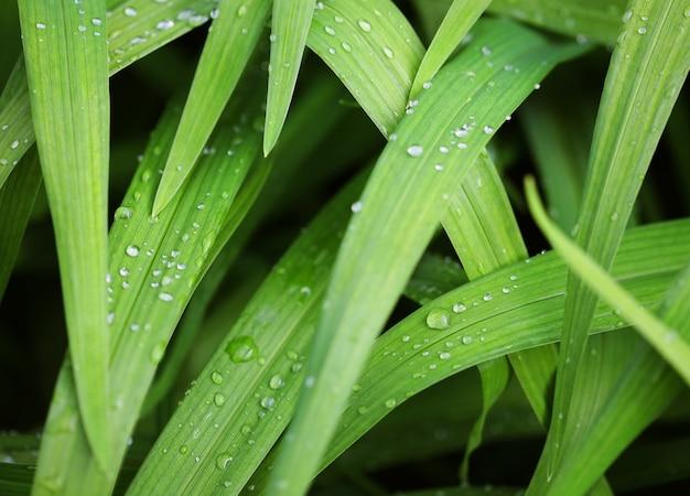 Erba verde fresca con goccioline d'acqua al sole