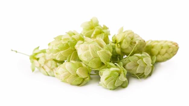 Ramo di luppolo verde fresco, isolato su una superficie bianca. coni di luppolo per fare birra e pane. avvicinamento