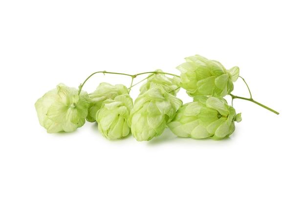 Luppolo verde fresco isolato su bianco