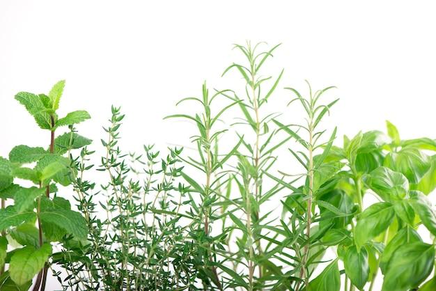 Erbe aromatiche verdi fresche della cucina isolate su bianco