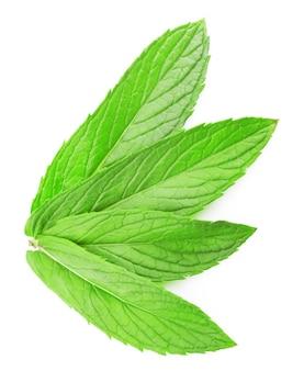 Foglia verde fresca di melissa isolato su priorità bassa bianca