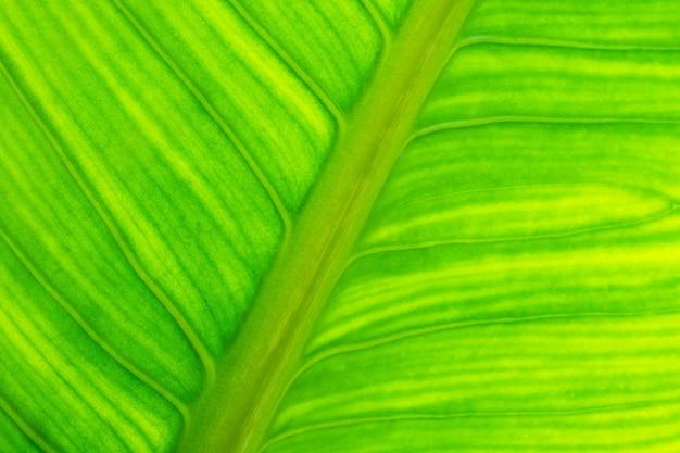 Fondo astratto naturale di struttura della foglia verde fresca