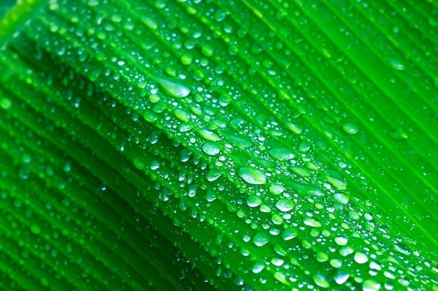 Sfondo di foglie verdi fresche