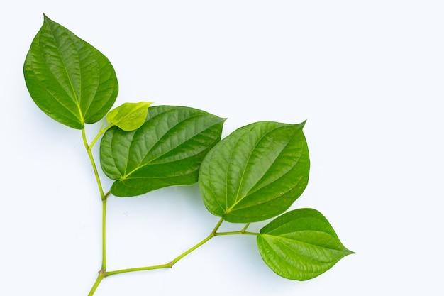 Foglie verdi fresche della pianta di betel su superficie bianca