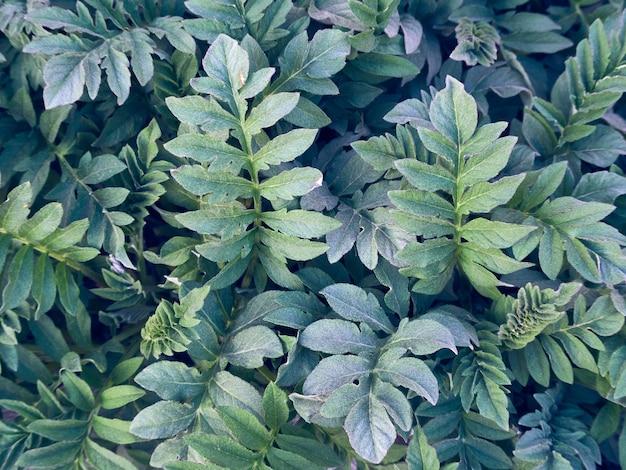 Fondo fresco del modello delle foglie verdi.