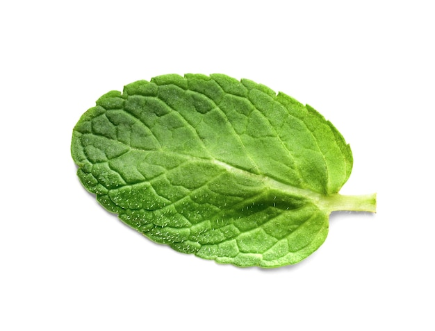 Foglia di menta verde fresca isolata su sfondo bianco