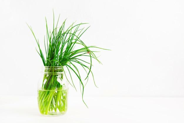 Cipolla verde fresca nel barattolo di vetro su fondo bianco con lo spazio della copia