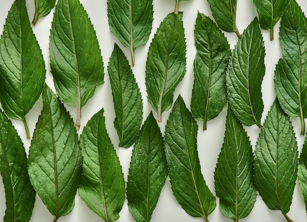 Menta verde fresca delle foglie organiche.