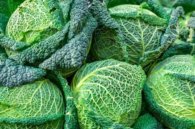 Cavoli verza verdi freschi in un mercato. verdura.
