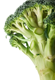 Broccoli verdi freschi che germogliano isolati su fondo bianco