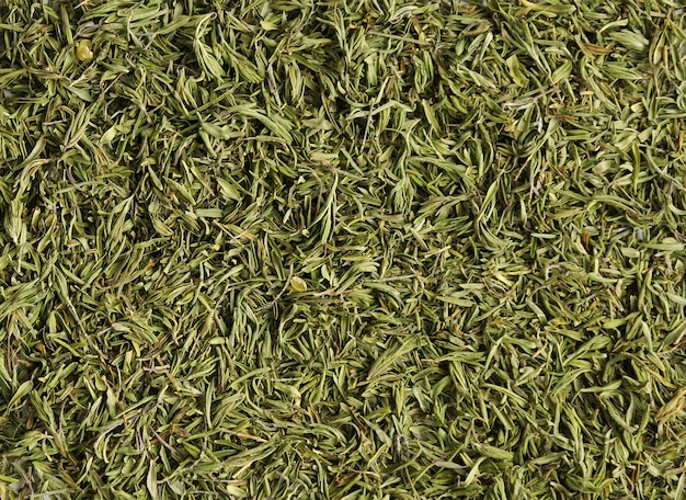 Sfondo di timo verde fresco