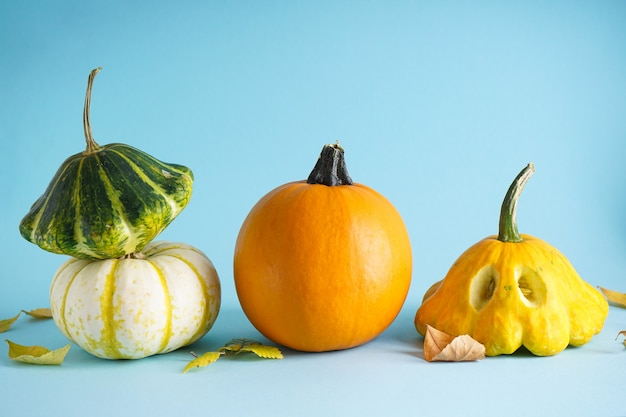 Zucche fresche di halloween e foglie secche su sfondo blu