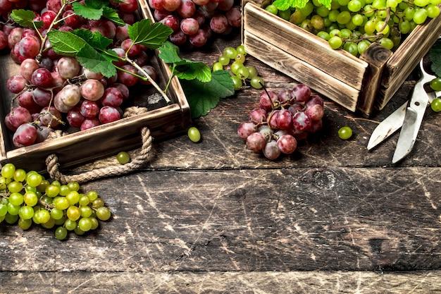 Raccolta fresca di uve in cassette. su un tavolo di legno.