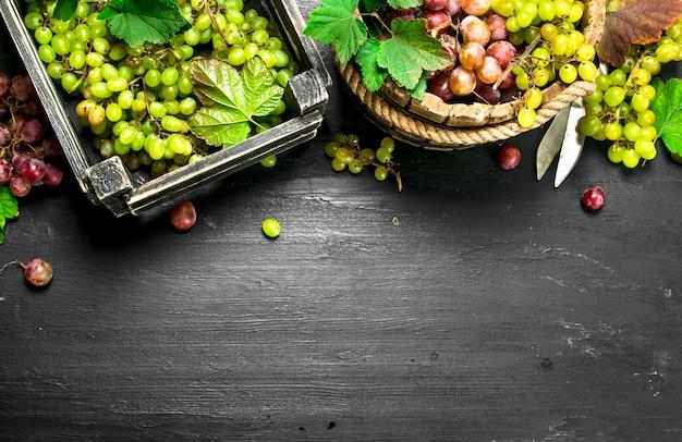 Raccolto fresco di uva rossa e verde. sulla lavagna nera.