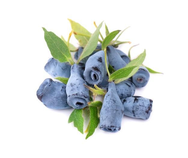Frutti di bacca blu freschi del caprifoglio isolati