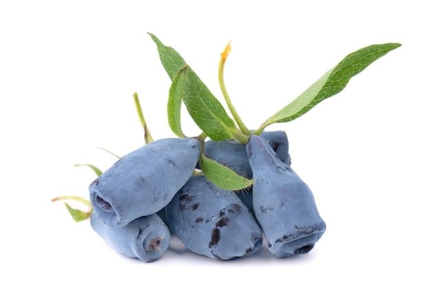 Frutti di bacca blu caprifoglio fresco con foglia, isolato su bianco