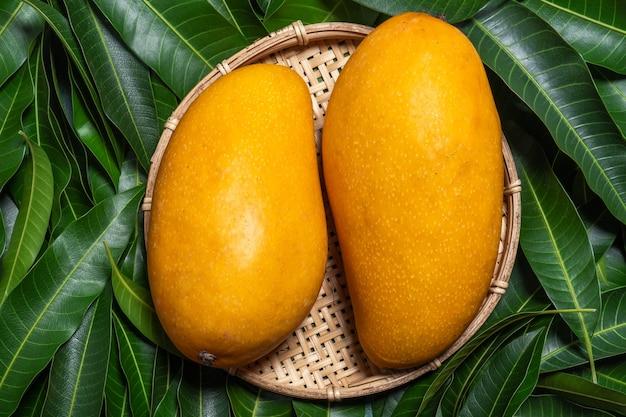 Bella succosa frutta di mango fresca in un setaccio di bambù su sfondo di foglie verdi