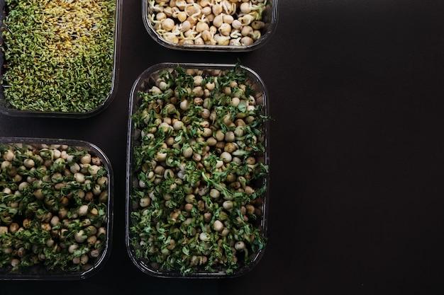 I microgreens verdi succosi freschi crescono in vassoi. il concetto di superfood, alimentazione sana, veganismo. vista dall'alto con copia spazio.