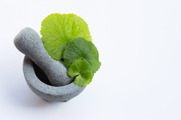 Foglie fresche di centella asiatica in mortaio con pestello su sfondo bianco.