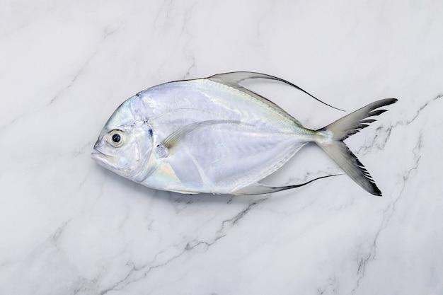Pesce carangidi fresco di longfin installato sul fondo di marmo bianco del tavolo da cucina. vista dall'alto e copia dello spazio. Foto Premium