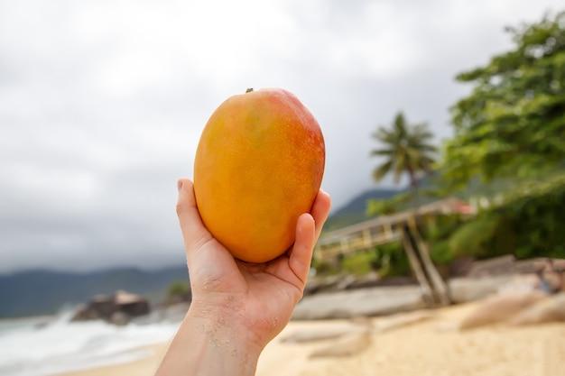 Mango fresco nelle mani sull'oceano della spiaggia.