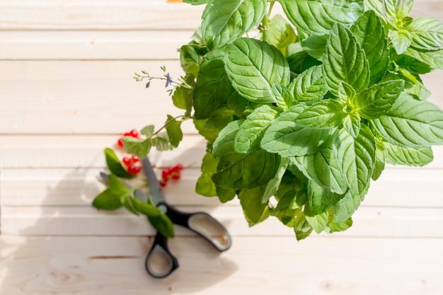 Foglie di menta e bacche fresche di estate su fondo di legno bianco, vista superiore, foglie di menta luminose e bacche rosse saporite