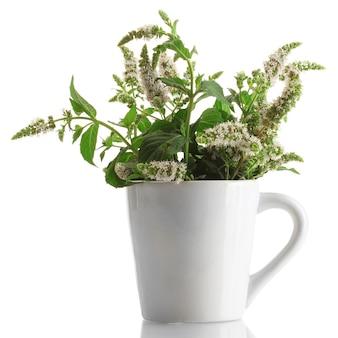 Menta fresca con fiori in tazza, isolata on white