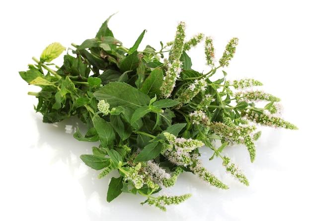 Menta fresca con fiori, isolata on white
