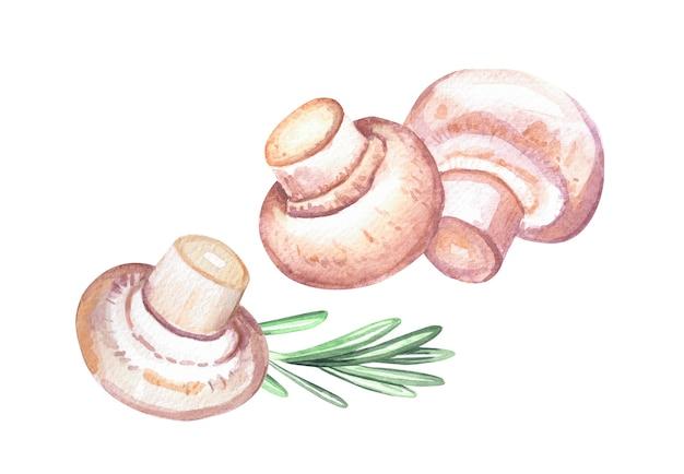 Funghi champignon freschi e rosmarino. illustrazione disegnata a mano dell'acquerello isolato su priorità bassa bianca.