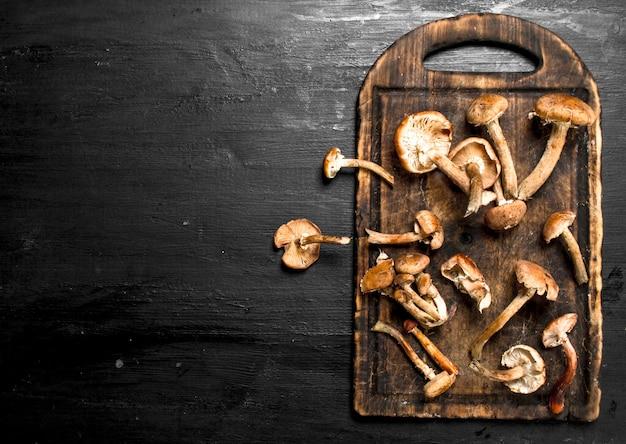 Agarichi freschi del miele dei funghi sul bordo