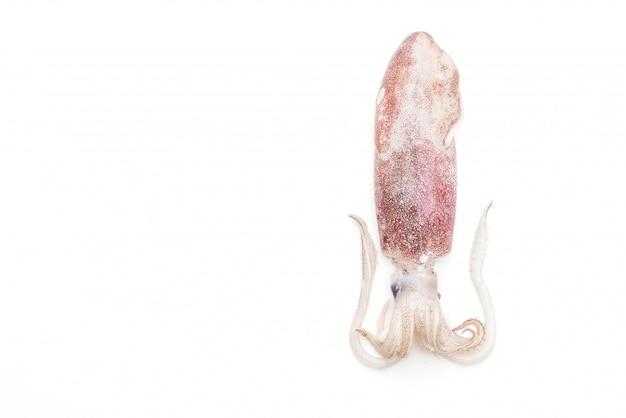 Polpo o calamari freschi crudi