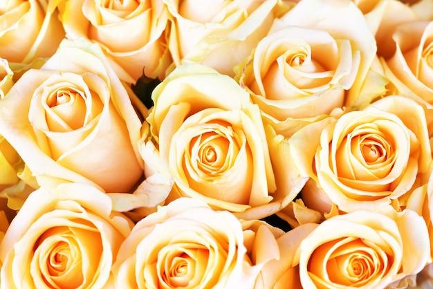 Rose arancioni fresche con foglie verdi-natura sfondo soleggiato primavera. messa a fuoco morbida e bokeh