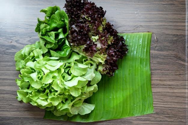 Verdure biologiche fresche per preparare insalata di cucina corallo rosso quercia verde e bambino verde cos