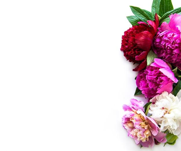 Confine di fiori di peonia fresca con copia spazio su sfondo bianco, piatto laici.