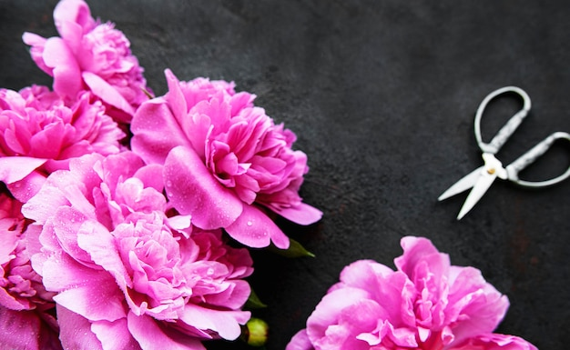 Bordo di fiori di peonia rosa fresca con spazio di copia su superficie nera piatta
