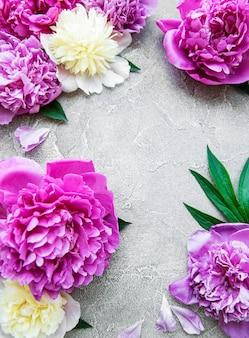 Bordo di fiori di peonia rosa fresca con spazio di copia su superficie di cemento grigio, piatto