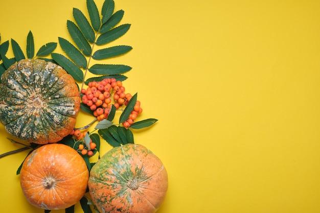 Zucca fresca su sfondo giallo, zucca tagliata a metà e diverse zucche di diversi colori su foglie autunnali gialle