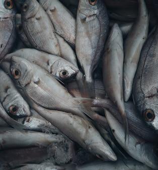 Pesce crudo fresco nel mercato, frutti di mare