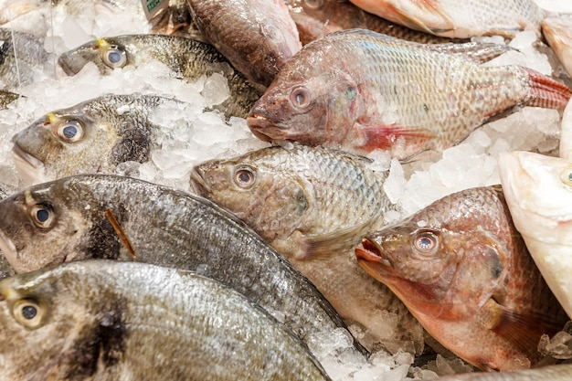 Pesce intero crudo fresco diverso refrigerato su ghiaccio, al mercato del pesce. dentice, tilapia,