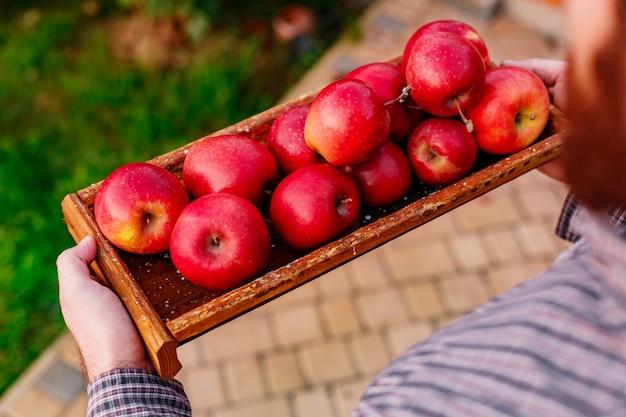 Mele rosse mature fresche in scatola di legno in mani maschii. vendemmia autunnale