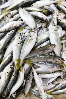 Mercato del pesce fresco a batumi georgia. pesce vivo nel ghiaccio. passera, triglia, salmone, pesce gatto, anguilla, rane, pastinaca, storione, cozze, ostriche. foto di alta qualità
