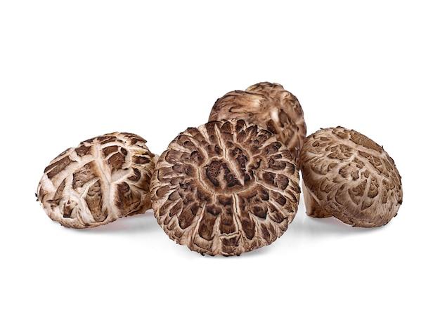 Funghi shiitake freschi su sfondo bianco