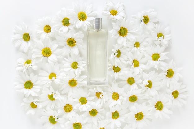 Profumo fresco di primavera. vaso di vetro con un sacco di boccioli di fiori margherita dorata su sfondo bianco. vista dall'alto, piatto