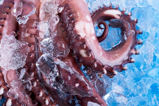 Calamari freschi su ghiaccio nel mercato.