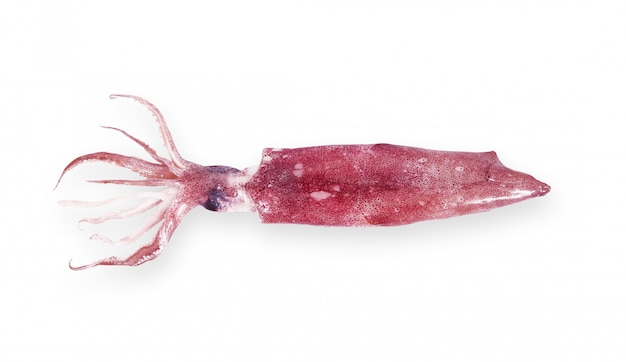 Calamari freschi
