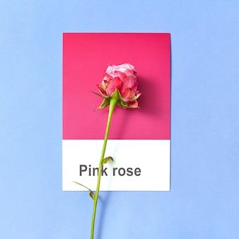 Fresh summer rose su una carta in due tonalità per congratularmi con uno sfondo pastello con spazio di copia.