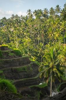 Aria fresca e calda al mattino su un'isola esotica, silenzio pacifico nell'amichevole indonesia estiva