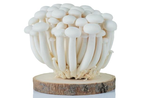 Fungo shimeji bianco fresco su sfondo bianco