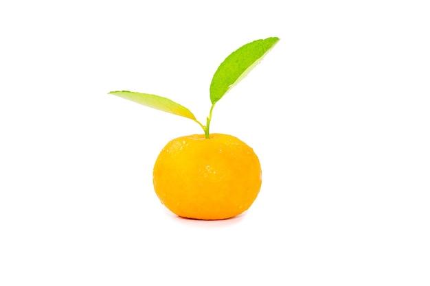 Arancia gialla fresca isolata