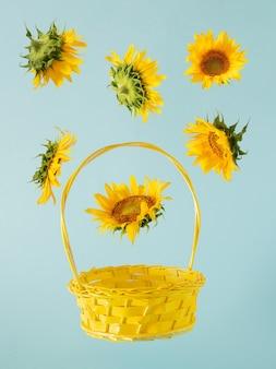 Girasole giallo fresco e cesto illuminante giallo sullo sfondo pastello blu. giardinaggio estivo giungla tropicale arte astratta